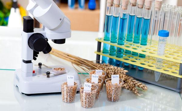 Зерновая лаборатория